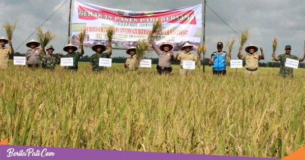 Panen Raya Padi Melimpah, Petani di Desa Pekalongan Winong Minta Dibuatkan Embung