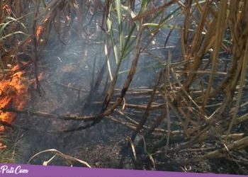 Empat Hektar Lahan Tebu di Mojoluhur Jaken, Ludes Dilalap Api
