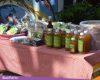 Kampung Jamu Desa Kutoharjo, Budidayakan Ratusan Jenis Tanaman Obat